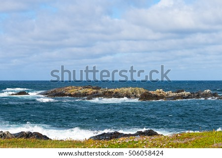 Small rocky island with a flock of cormorants