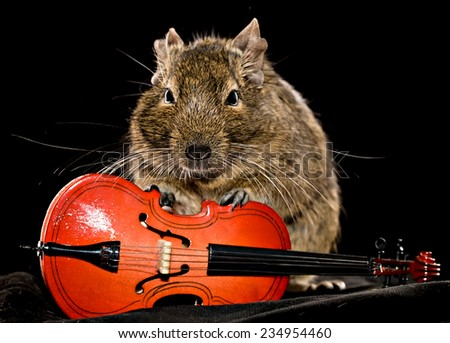 small rodent with little cello, full-size front view on black background - stock photo