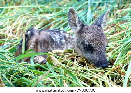 small roe deer over the plant background in sunny day - stock photo