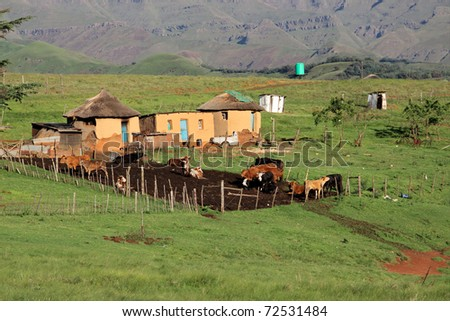 Small rural huts with cattle, South Africa - stock photo