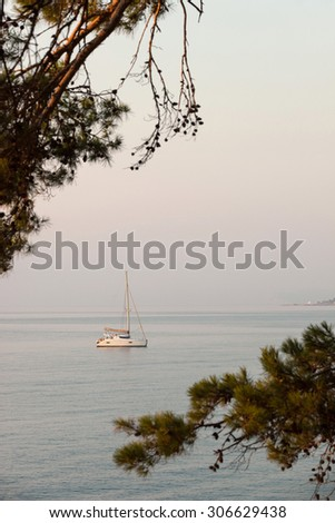 Small sailing catamaran anchored View through pine branches Outdoors - stock photo