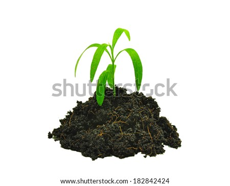 Small sapling growing out from heap of soil - stock photo