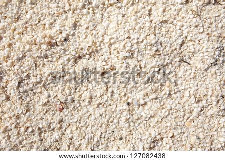 Small seashel background, full frame, Shell beach, Western Australia - stock photo
