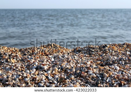 small seashells can be used for cleaning the feet. or floor design in the shower/seashells on the beach
