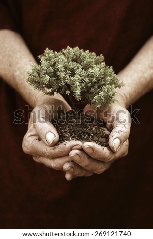 Small seedling growing  - stock photo