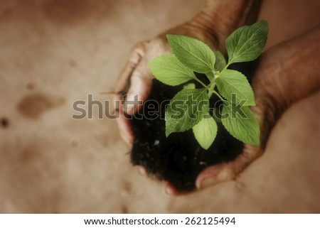 Small seedling growing in hands