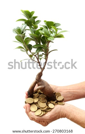 Small seedling growing out of Australian coins in hands - stock photo