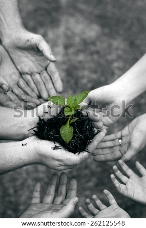 Small seedling growing  - teamwork, cooperation, support - stock photo