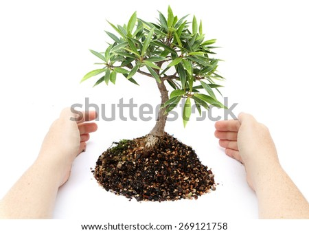 Small seedling growing with hands protecting it - stock photo