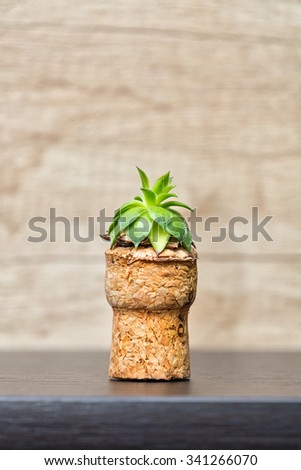 Small sempervivum plant putted in cork - up cycling idea - stock photo