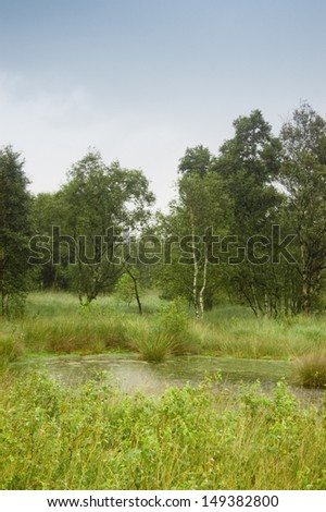 Small slough in the high moor of Eversmeer, East Friesland  - stock photo