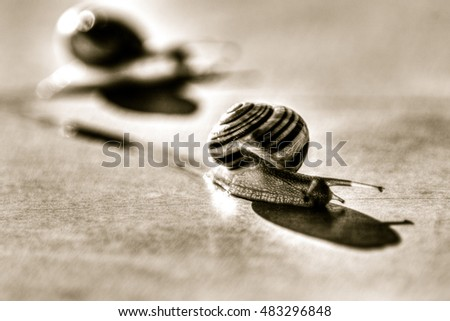Small snails moving HDR Shallow Depth of Field horizontal black and white split toning photography