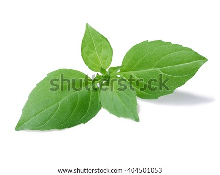 Small, spear-like basil leaves, known as Lemon Basil. Separate clipping paths for both leaves and shadow