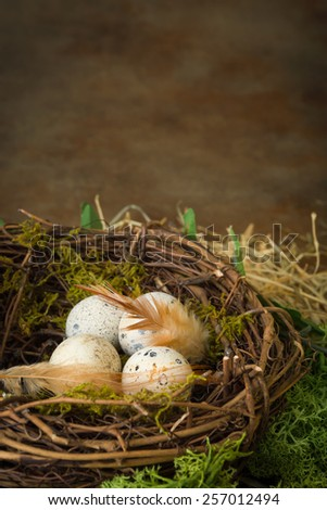 Small speckled bird's eggs lying in a nest - stock photo