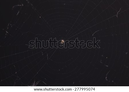small spider on web - stock photo