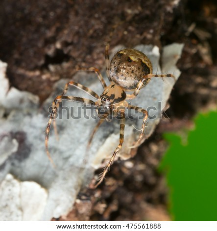 Small spider on wood, high magnification