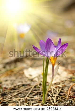 Small spring flower - stock photo