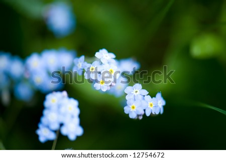 Small spring flowers