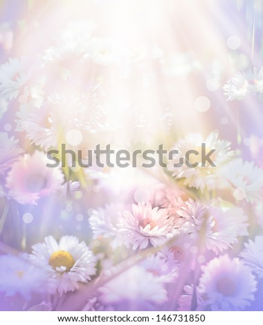 Small spring flowers/white blooming daisy flowers on light romantic background - stock photo