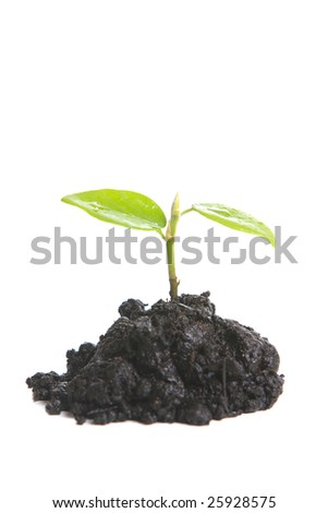 Small sprout isolated on white - stock photo