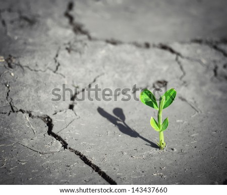 Small sprout on death land. Conceptual scene. - stock photo