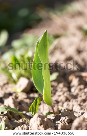 small sprout plants in soil