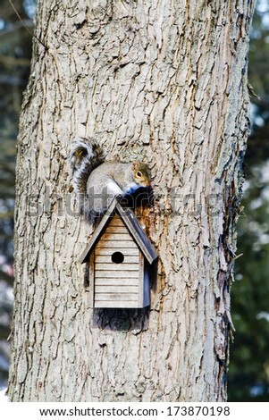 Small squirrel on birdhouse on tree watching its surroundings - stock photo