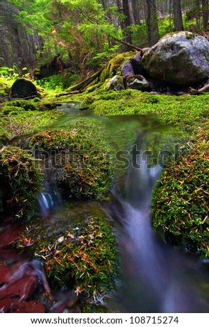 Small stream flows through a lush moss covered forest of Glacier National Park - stock photo