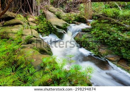 Small stream in jungle - stock photo