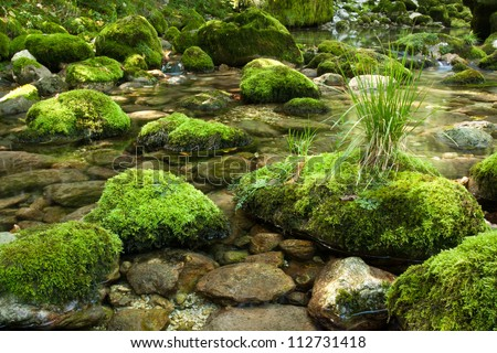 Small stream with rocks covered with moss - stock photo