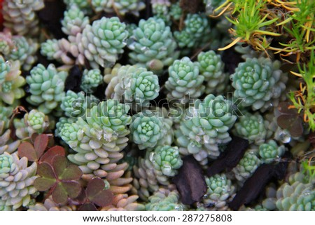 Small succulents - stock photo