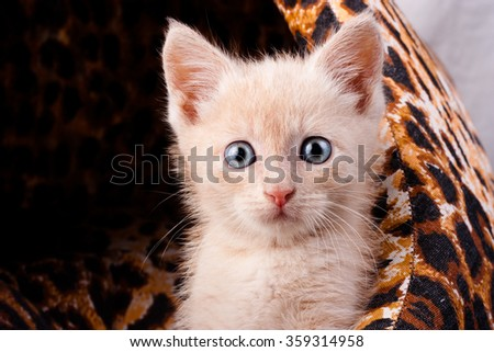Small surprised kitten  - stock photo