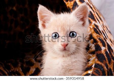Small surprised kitten  - stock photo