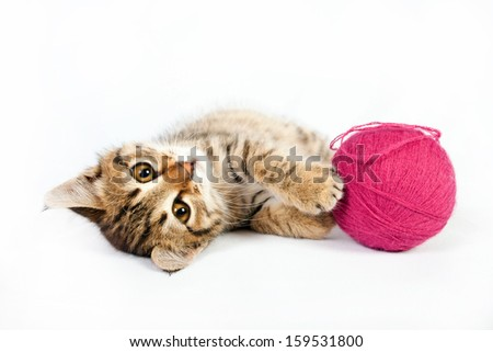 Small tabby kitten playing with a ball of yarn - stock photo