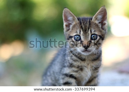 Small tabby kitten with blue eyes. Selective focus. - stock photo
