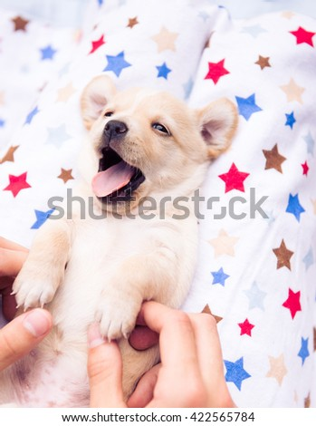 Small Tan Puppy Relaxing and Yawning on Soft Blanket Outside - stock photo