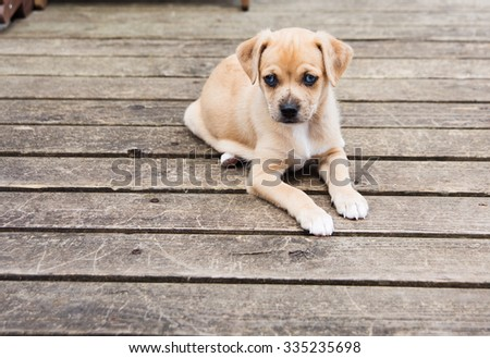 Small Terrier Mix Puppy Laying Outside on Wooden Deck - stock photo