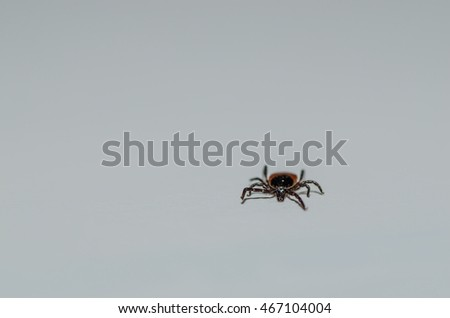 small tick on white background