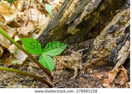 Small toad at a stump - stock photo
