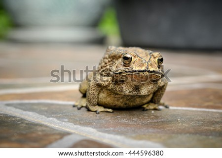 small toad on floor tile