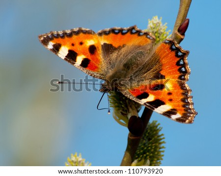 Small Tortoiseshell (Aglais urticae L.) - stock photo