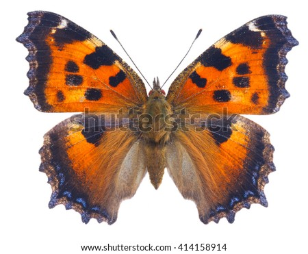 small tortoiseshell butterfly isolated on white background - stock photo