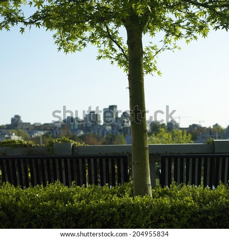 Small tree and city view - stock photo
