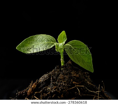 Small tree are sprouting from the ground on a black background . growth concept. - stock photo