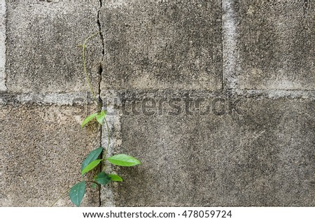 Small tree-during the growth on cement wall
