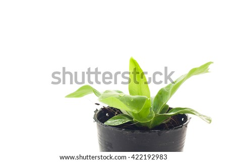 Small tree growing in plastic pots.