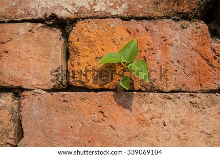 small tree growth on old brick