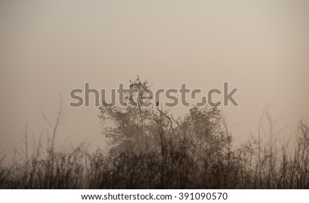 Small tree in a meadow dew and morning fog in the spring sunrise with blurred background and warm yellow.