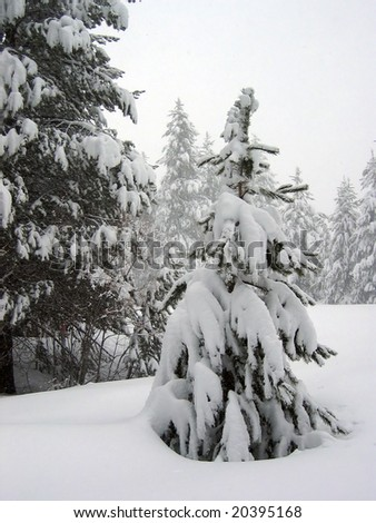 Small Tree in a Snowstorm - stock photo