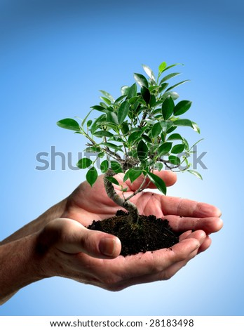 Small tree in cupped hands - stock photo